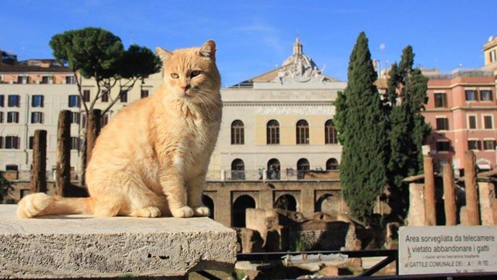 roman cats largo argentina